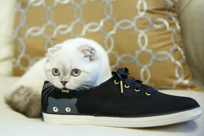 Keds x Taylor Swift's Champion Sneaky Cat
