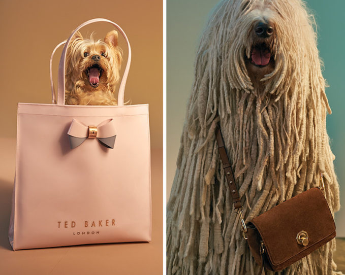 The Most Fetching Bags of Fall 2016